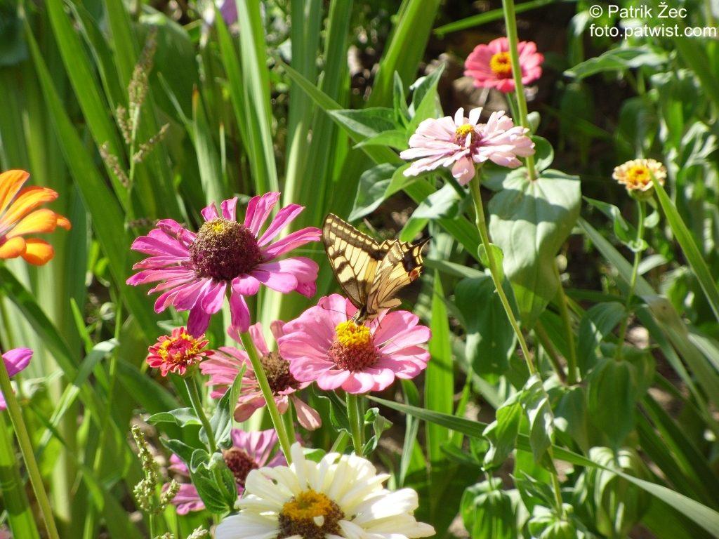Kvety a motýľ (11.08.2013)